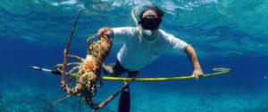 spearfish-crawfish